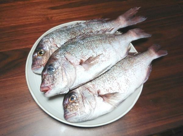 淡路島産の鯛